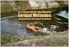 Enrique Metinides - Sur le lieu de la coïncidence